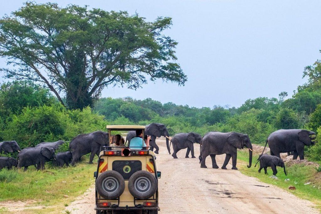 Murchison Falls game drive