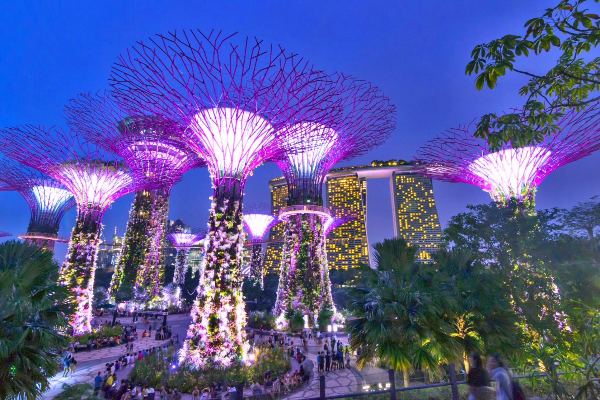 supertree-grove-singapore-gardens-by-the-bay